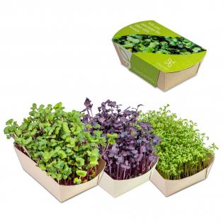 Microgreens - Tuin